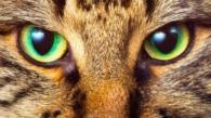 ojos-gato-carmen-768x480